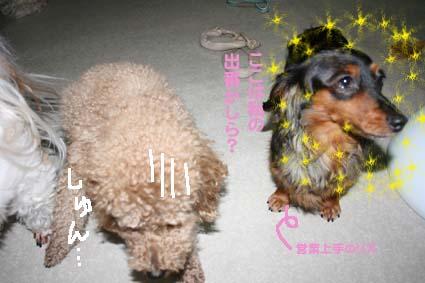 4_20120610184126.jpg