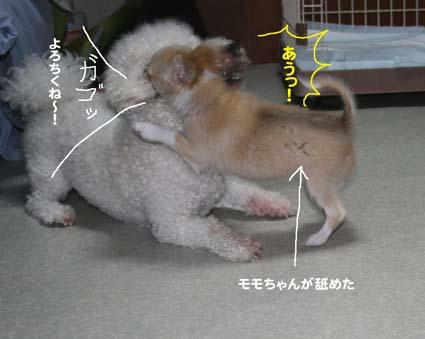 4_20120619165918.jpg