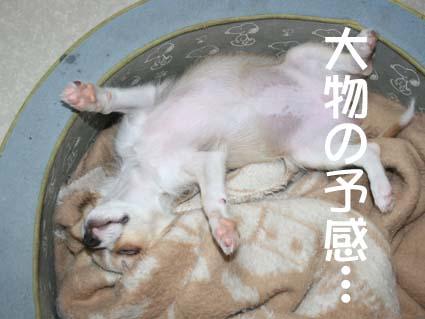 4_20120626150707.jpg
