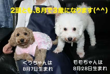 4_20120719163554.jpg