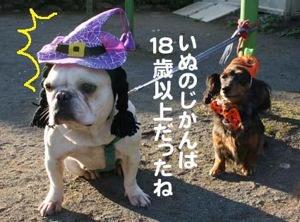 4_20121101155708.jpg