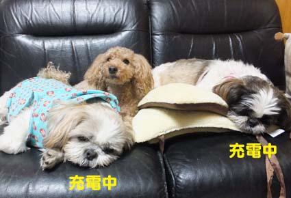 4_20121211115452.jpg