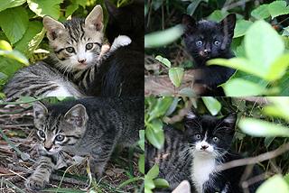 4匹の子猫-2