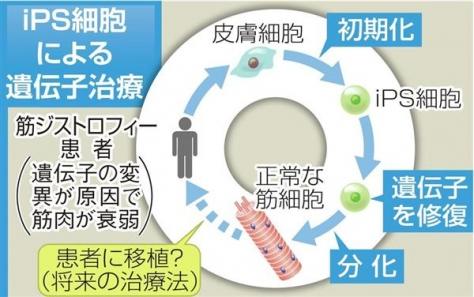 iPS細胞による遺伝子治療