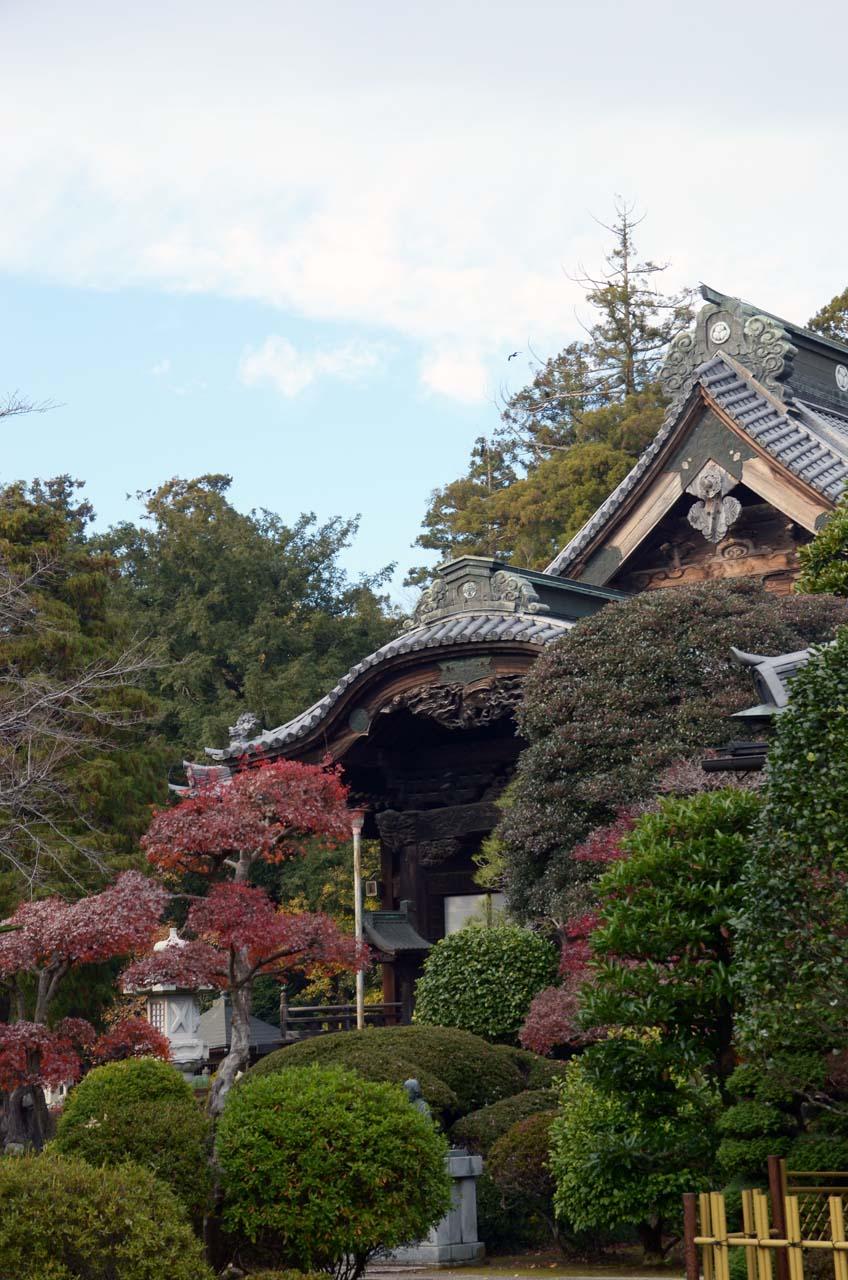 DSC_7562弘経寺