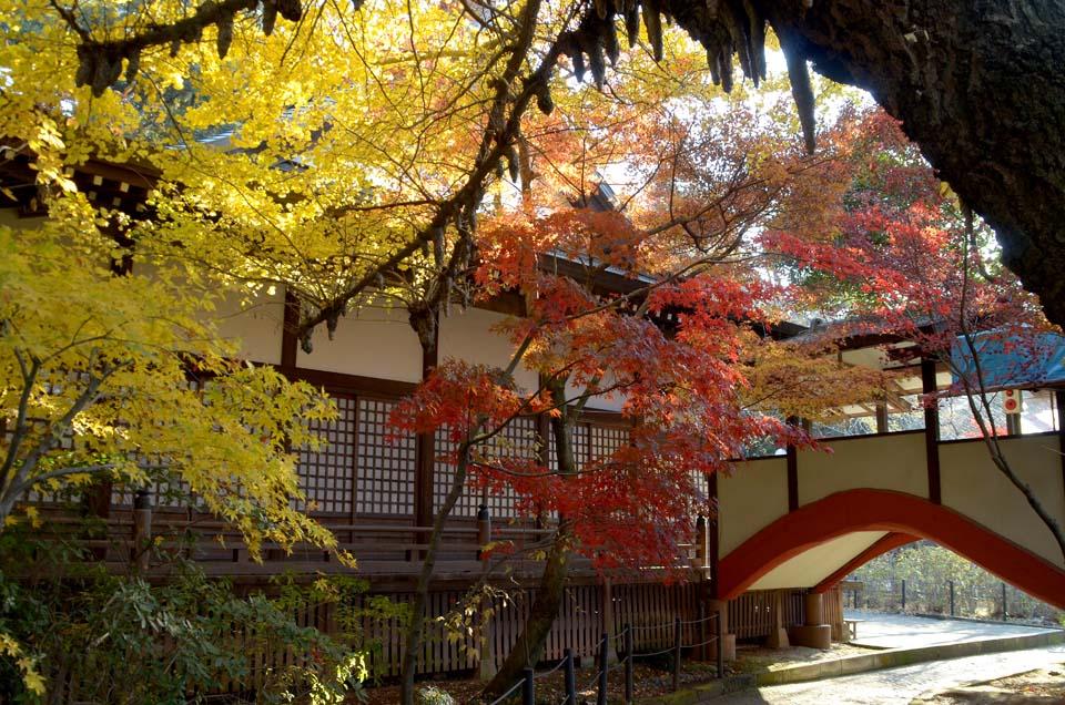 D70_0362本土寺