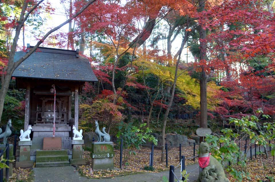 D70_0368本土寺