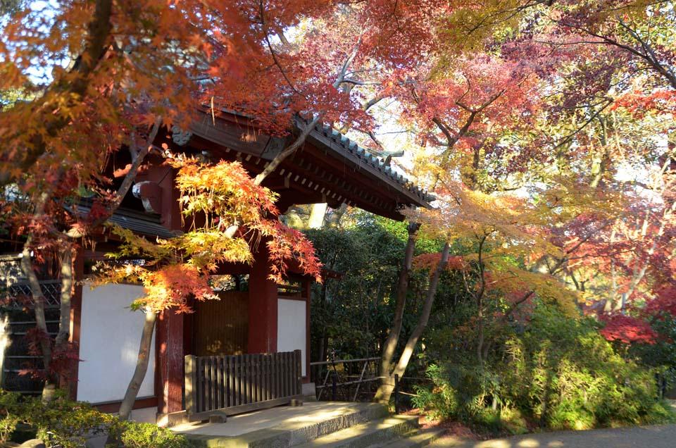 D70_0395本土寺