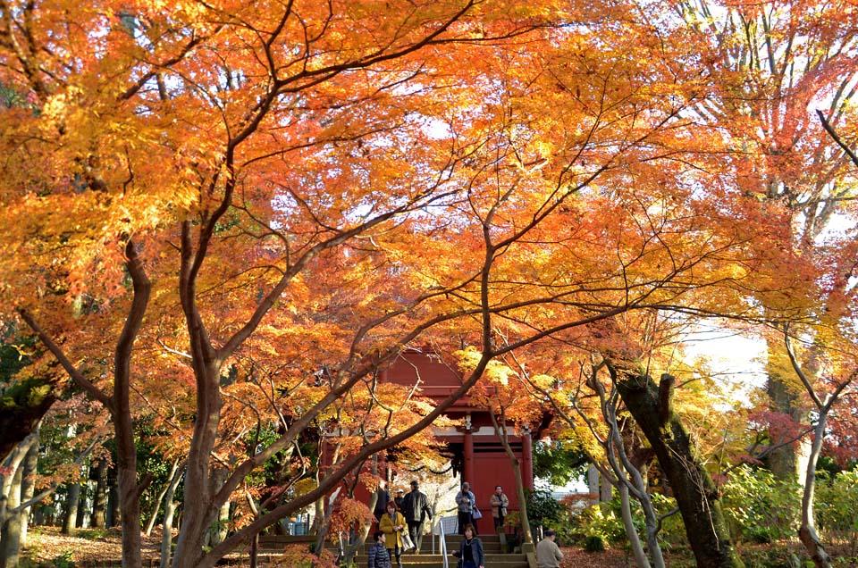 D70_0407本土寺