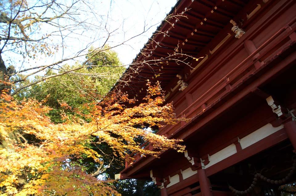 D70_0413本土寺