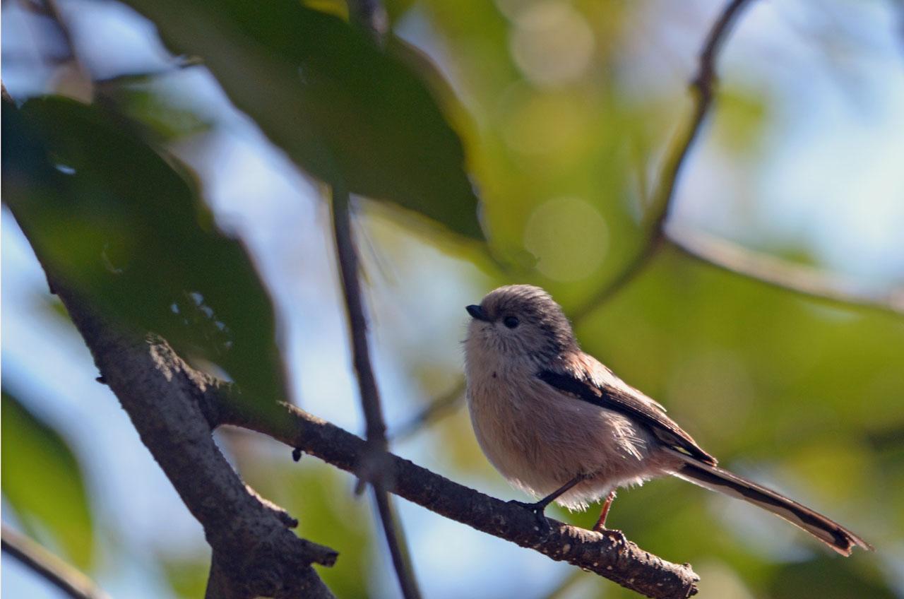 D70_7903小鳥