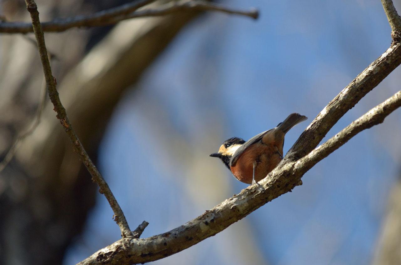 D70_7957小鳥