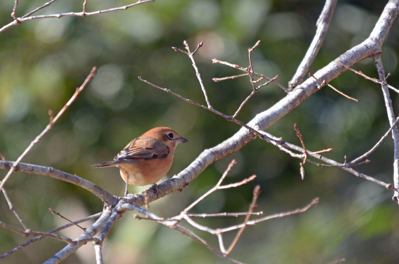 D70_8139小鳥