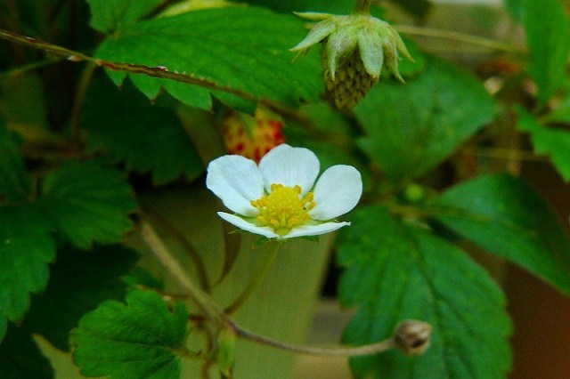 真っ白な花が咲くよ♪