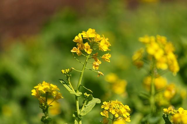 黄色い花が好きです!