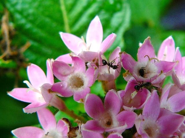 蟻さん大好き!
