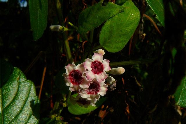 色が綺麗で、フリフリ花びら♪