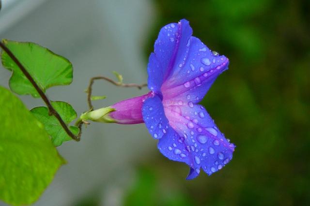 雨に濡れて・・・