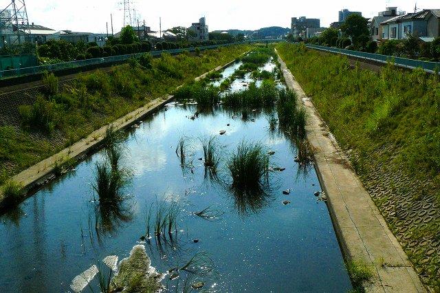 下って行くと鶴見川へ