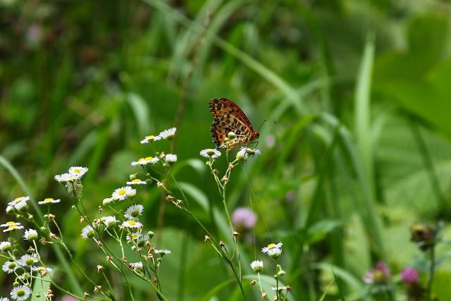 蝶の楽園なのにね~