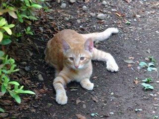 近藤勇生家の跡 猫