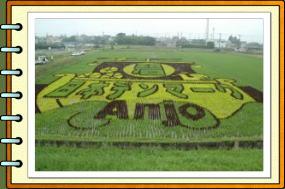 田んぼ2008