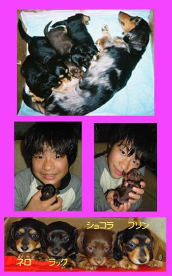 出産記念日kigou