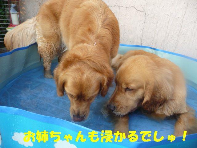 006_20100726013727.jpg
