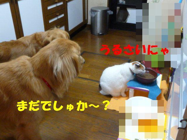 006_20101023005854.jpg