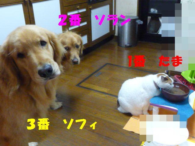 008_20101023005854.jpg