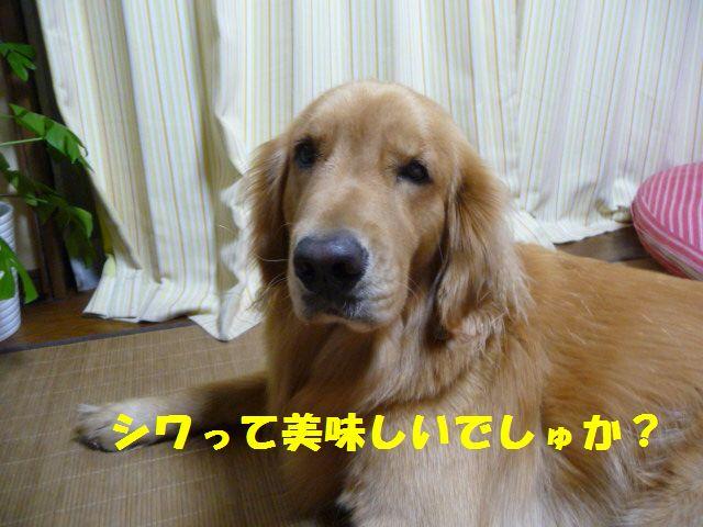 018_20100908001121.jpg