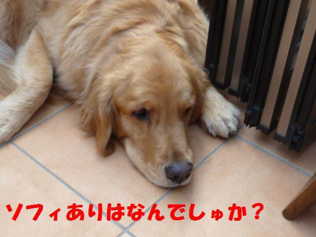 072_20110308233719.jpg