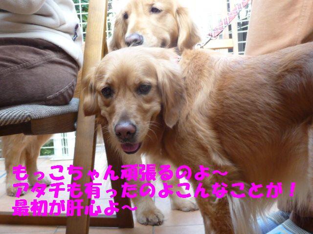 076_20110308233718.jpg