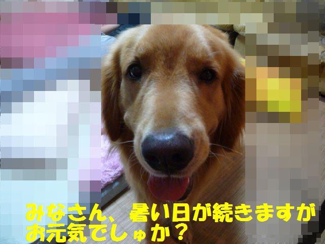 1_20100823235229.jpg