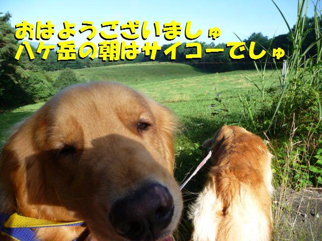 2010-07-19-1_20100719224509.jpg