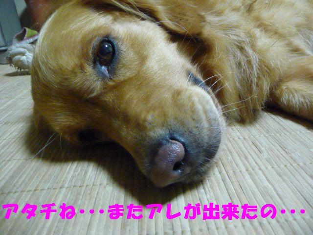 3_20100823235228.jpg