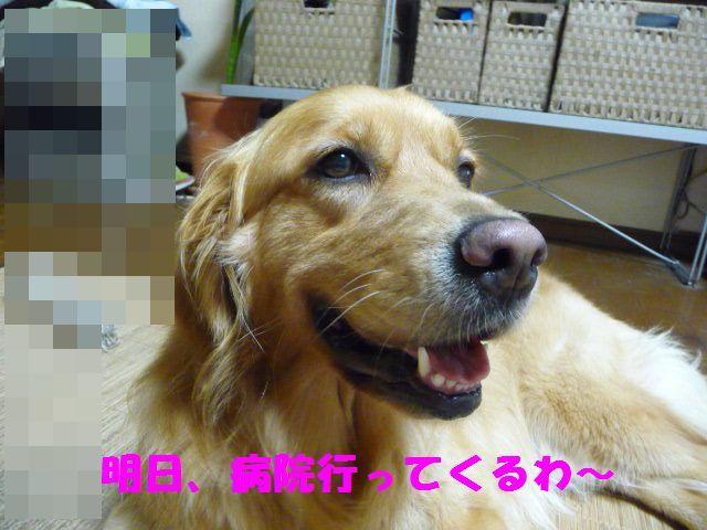 5_20100824012203.jpg