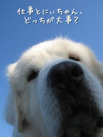 niko46.jpg
