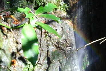 かがみの滝横虹拡大