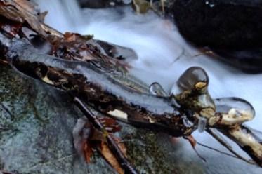 エビラ沢の滝氷