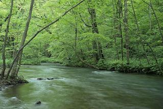 林の中の川