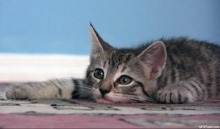 kitten1163_04_キキ