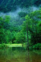 森の中1_25p