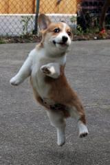 踊りたい気分