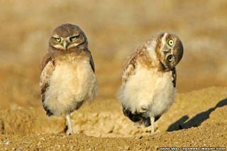 birds-funny-wallpaper-7.jpg