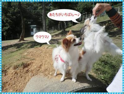 コピー ~ CIMG0101