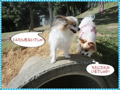 コピー ~ CIMG0099
