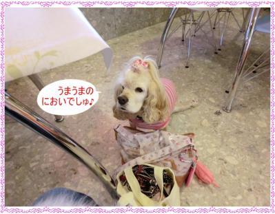 CIMG0122_20120402220203.jpg