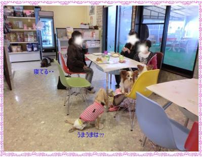 CIMG0134_20120402220159.jpg