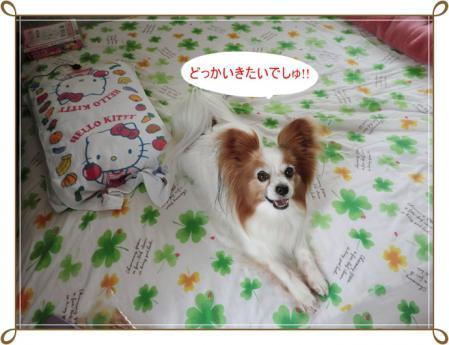 CIMG0279_20120606225850.jpg